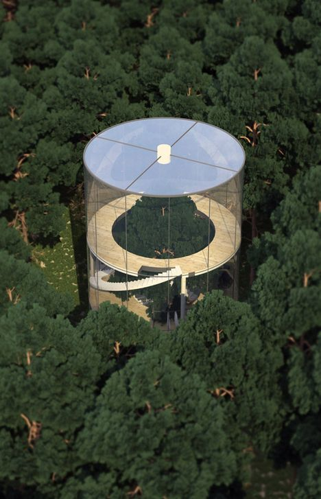 Tree in House: Glass Cylinder Wraps Five-Story Fir in Forest