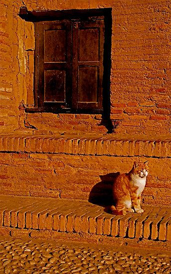 Despite the fact that her humans had gone to the trouble of painting their house to match her fur, Ginger longed to explore the world beyond the garden walls. #catherineclinch