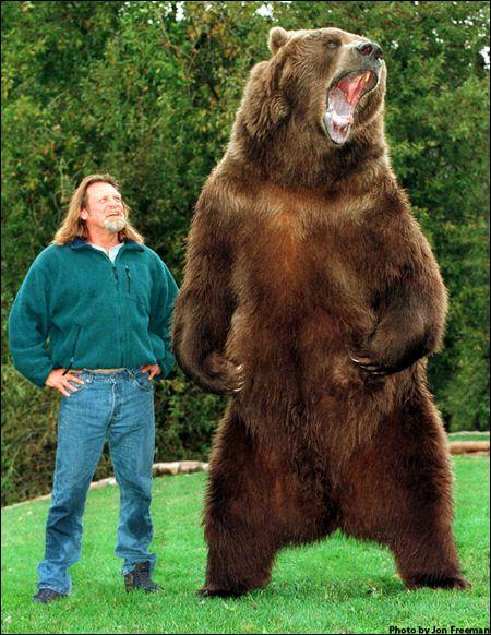 Doug Seus trains bears.    -    No, don't train them, just cuddle them and stuff.