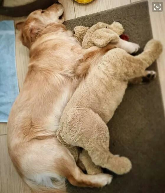 Loves his stuffed animal baby!