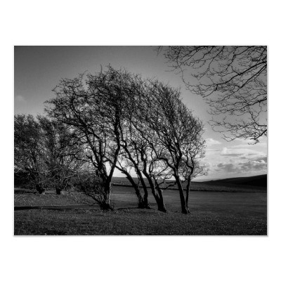 Stand Your Ground :-  The bareness of winter personified by a small group of trees. Much to my surprise I discovered (after processing) this to be a very powerful image.  #winter #trees #barren #countryside #country #rural #nature #fields #coastal #england #sussex #woodingdean #fineart