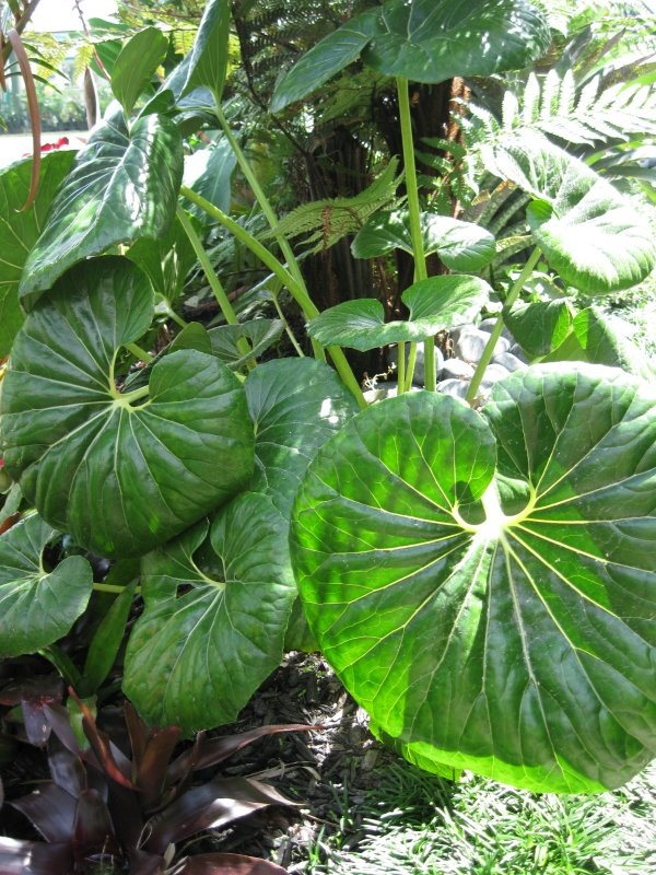Tractor Seats In Landscape Plants : Tractor seat plant c n ideas pinterest tractors