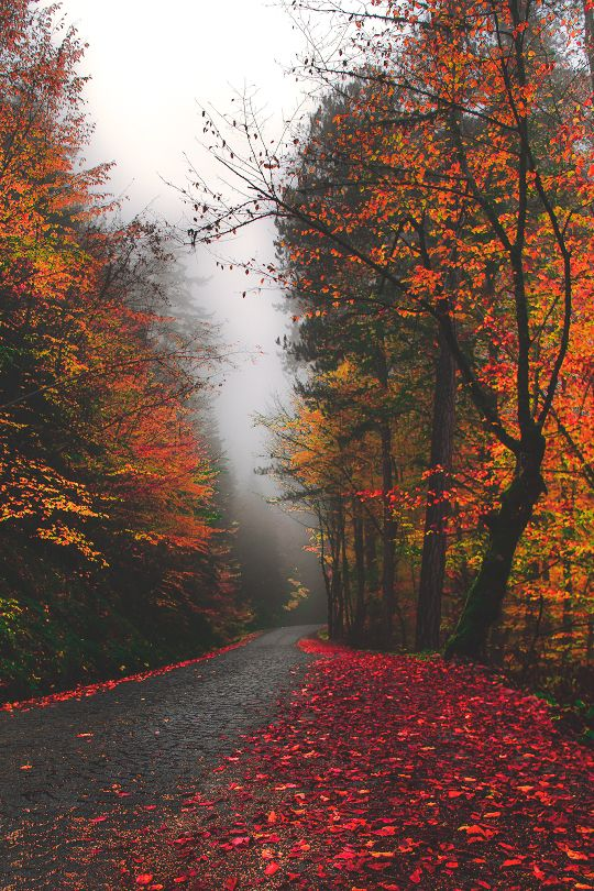 Perfect Rainy Autumn Road [unable To Determine Location Or Photographer] (autumn  Leaves Nature)