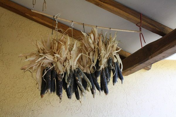 Corn hung up and strung up to dry!