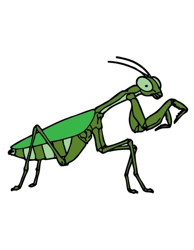 Qual è il colmo per una cicala? Scoprilo qui: http://buff.ly/1ARaJ3z