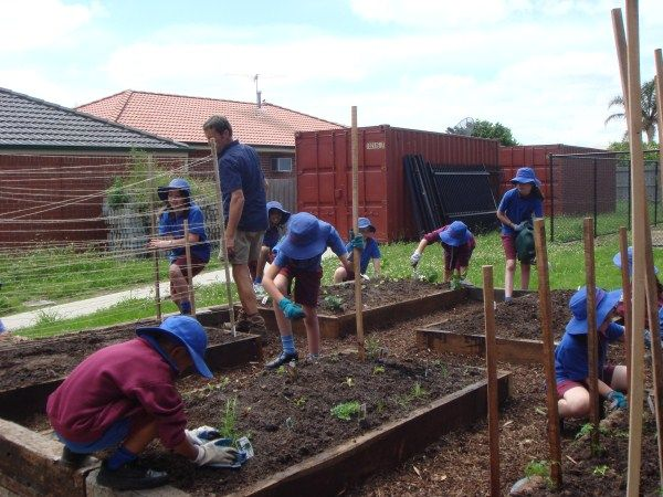 Greg from Yummy Gardens with the kids planting out school vegie plot designed & built by Yummy Gardens, Melbourne