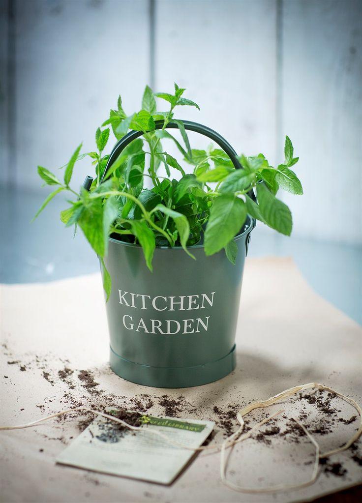 Small Kitchen Garden Bucket in Thyme