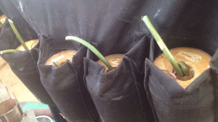 Tea time with Cladora: 'Mother-of-three abducted by Boko Haram, sent to b...