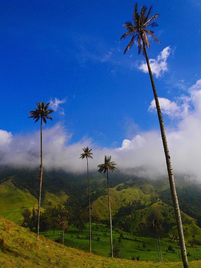 Salento, Quindío. Colombia   Cuna del árbol nacional