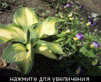 Садовые растения. :: Сибмама - о беременности, детях и о семейной жизни