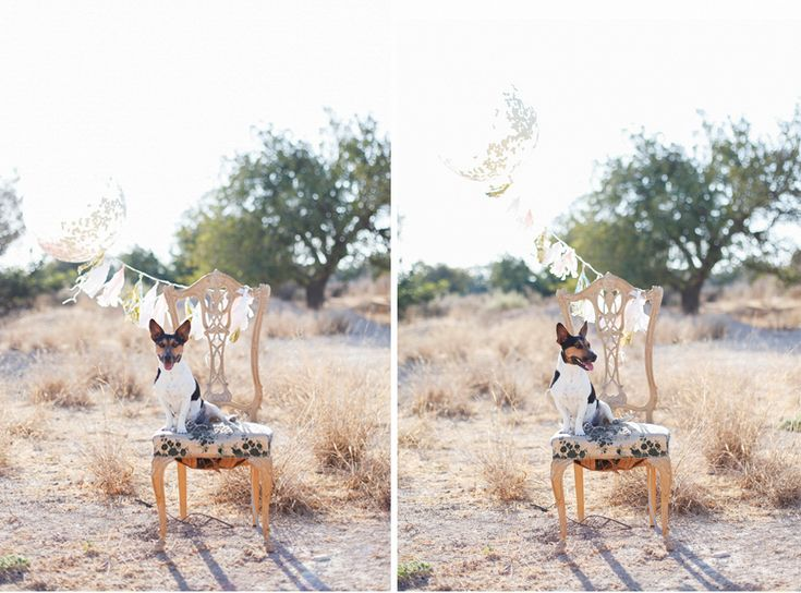 mommy to be #maternity #pregnancy #rustic #photo #shoot,  #sesion #fotos #embarazo #alicante, #fotografia #bebe Alicante, #sesion #fotos familia #campestre embarazo, premama #photography, #rustic photo session, rustic family shoot, #baby,  Sesion de fotos en exterior ,decoracion, décor  Rustic #Chic , photo shoot, #Wedding #photographer , #фотосессия #беременности в стиле #рустик #tussel #balloon #dog #jackrussel