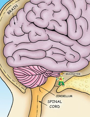 27 best sci- nervous syst images on pinterest   life science, Muscles