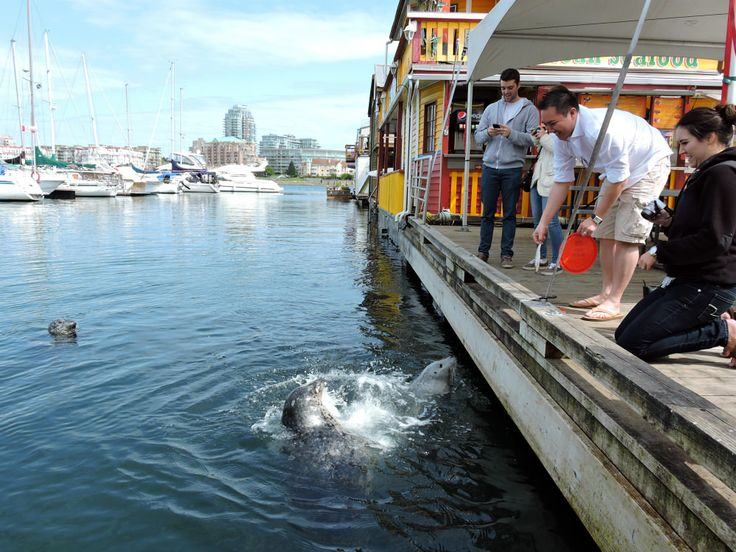 Victoria, BC • Vancouver Island • Fisherman's Wharf. Feed the seals!