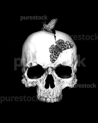 #Skull and night #butterfly #pencil #drawing #illustration #black #blackandwhite #draw #art #creative #photorealism #horror #horrormovie