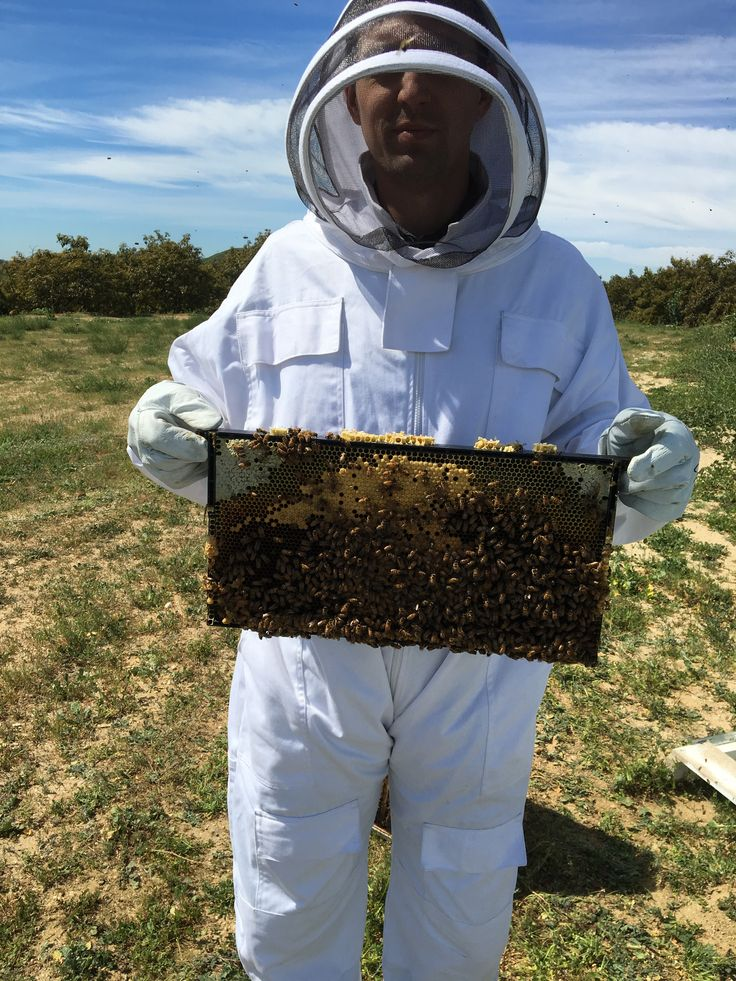 Me fearlessly holding a bee frame