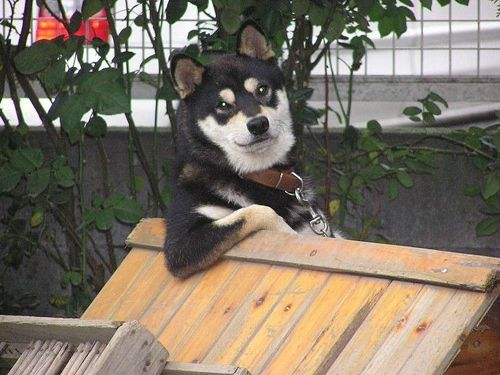 Dogs Who Think They Are, Like, Super Chill Bros  Dogs who think they are, like, super chill bros should be approached with caution and, for good measure, a six pack.: Cool Dogs, Funny Pics, Funny Dogs, Old Dogs, Funny Cat, Baby Animal, Red Riding Hoods, Dogs Pictures, Dogs Funny