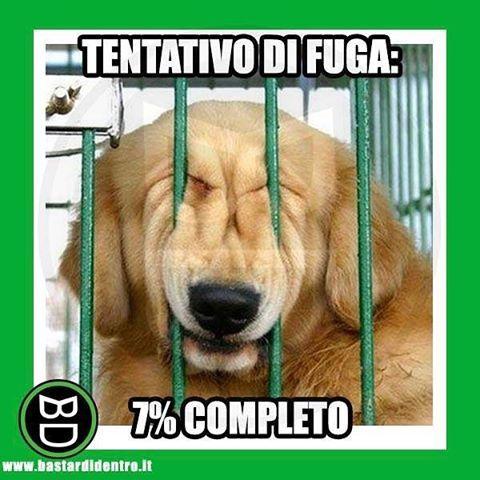 Seguici su youtube/bastardidentro #bastardidentro #cane #fuga www.bastardidentro.it