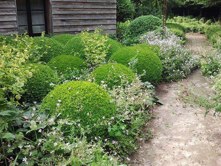 Круглые растения