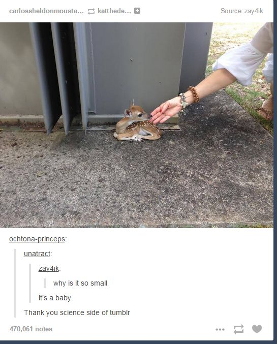 """""""Why is it so small?"""" """"It's a baby.""""  When the science side of Tumblr solved yet another mystery. 
