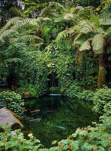 Trebah Gardens, Nr Falmouth, Cornwall, England: Koi pond