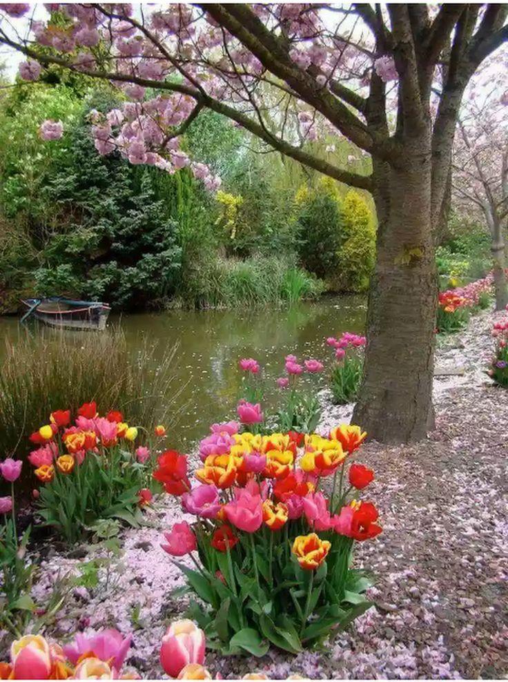 4368 best garden images on pinterest