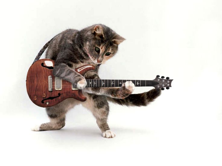1000+ images about animal also plays musical instrument on ...