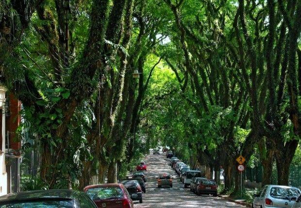 Brasile: Rua Gonçalo de Carvalho, la strada verde
