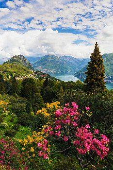 Ticino Lugano Azalées