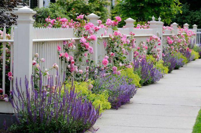 Lavender Garden Lavender Garden Front Yard Landscaping Yard Landscaping