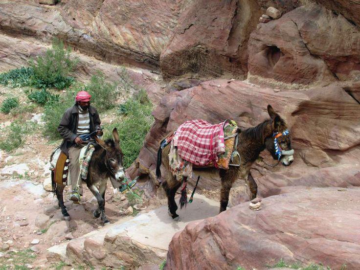 Local Bedouins use donkeys for tourist transportation at Petra, Jordan.