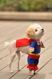 Imagine - Super Daisy :-)