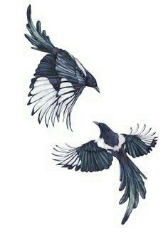 Image result for eurasian magpie