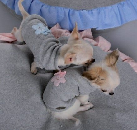 Sweat Baby Star Babydog Boutique bleu Babydog Boutique ma.189 : Boutique pour Chihuahua et petits chiens - Cup of Dog