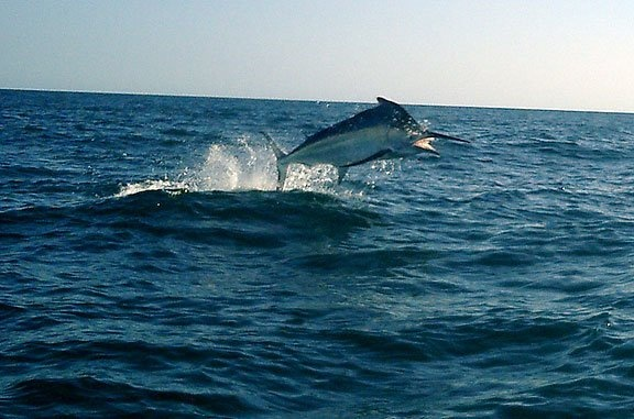122 best images about costa rica fishing on pinterest for Best saltwater fishing times