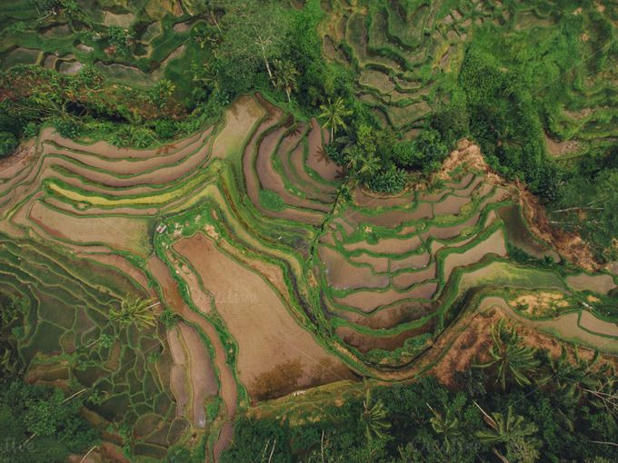 Rice paddy terraced fields by Jacob Lund Photography on @creativemarket