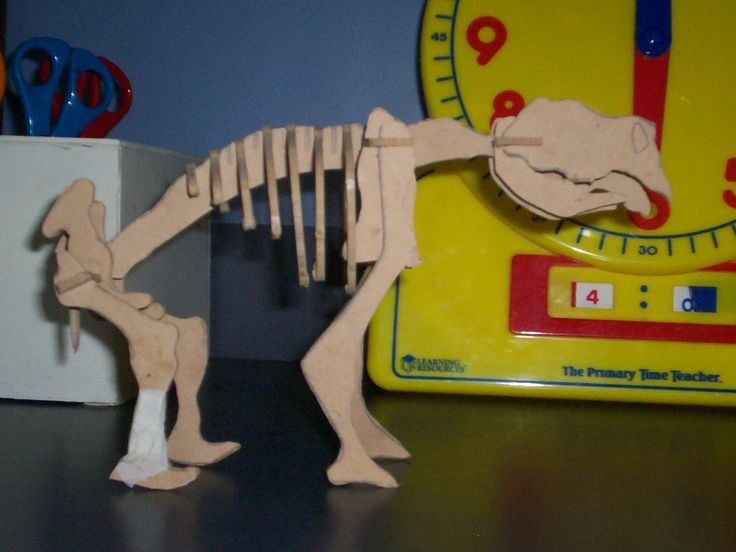 This is a miniature diprotodon skeleton I made from scratch before making the life sized one.