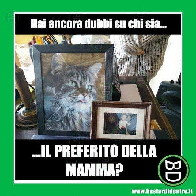 Hai ancora dubbi su chi sia il preferito della mamma? #bastardidentro #gatto #foto #ipnoticamentebastardidentro www.bastardidentro.it