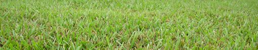 When and How to Fertilize Centipede Grass | Today's Homeowner