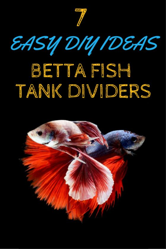 7 easy diy ideas for betta fish tanks with divider betta for Easy to care for fish