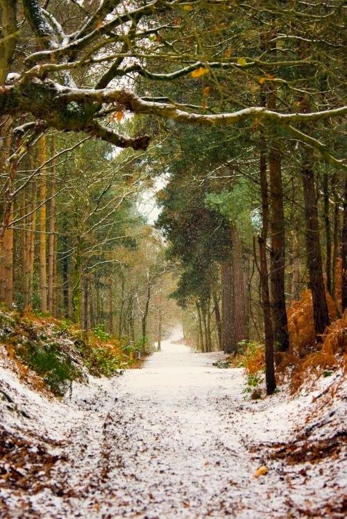 Delamere Forest Park (Cheshire, England) [photographer unknown]