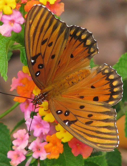 ** Butterfly
