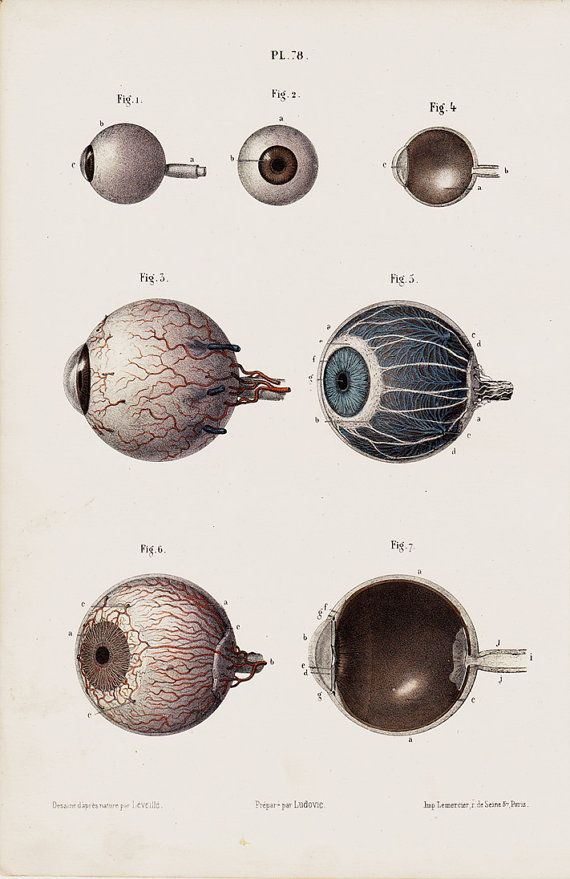 1853 Antique EYES print fine anatomy by TwoCatsAntiquePrints, $29.00