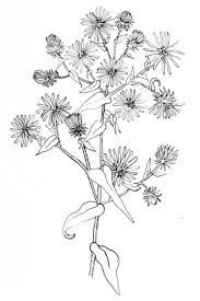 Image result for drawing of weeds