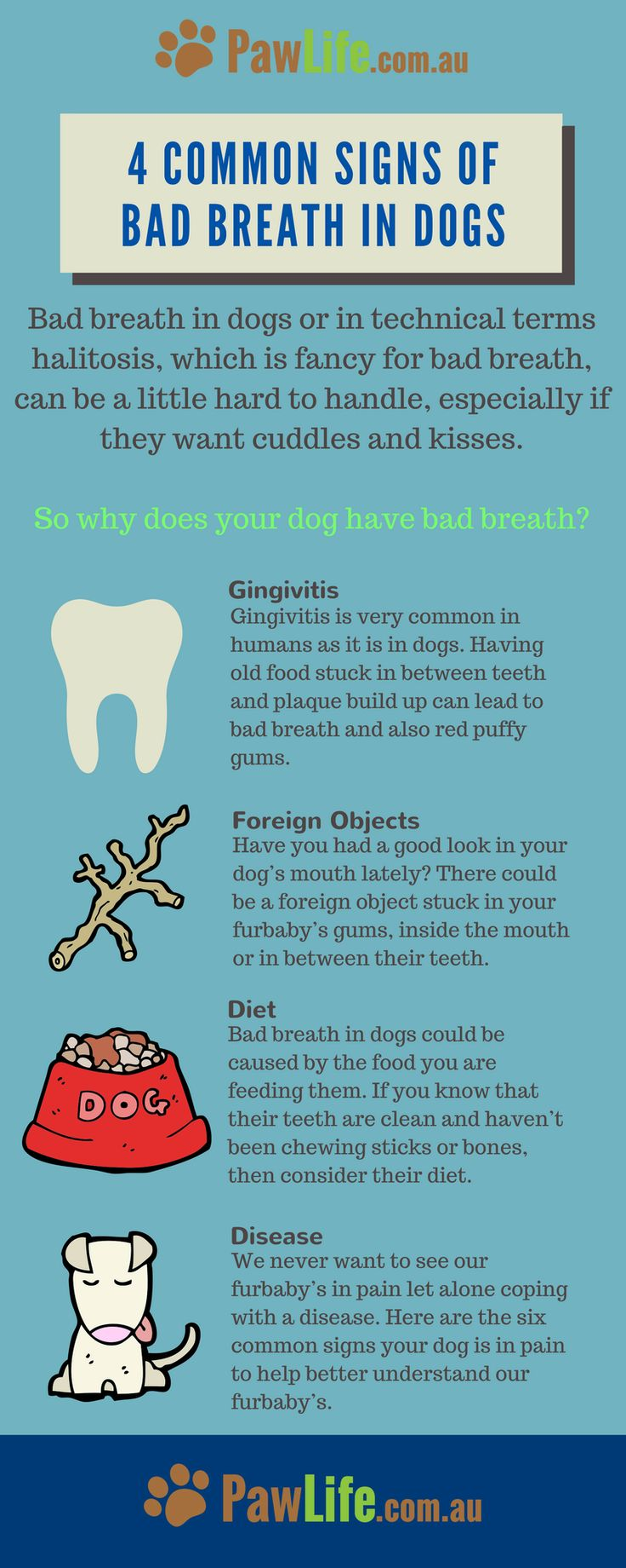Bad breath in dogs can be difficult. Here are the common signs of bad breath in dogs.