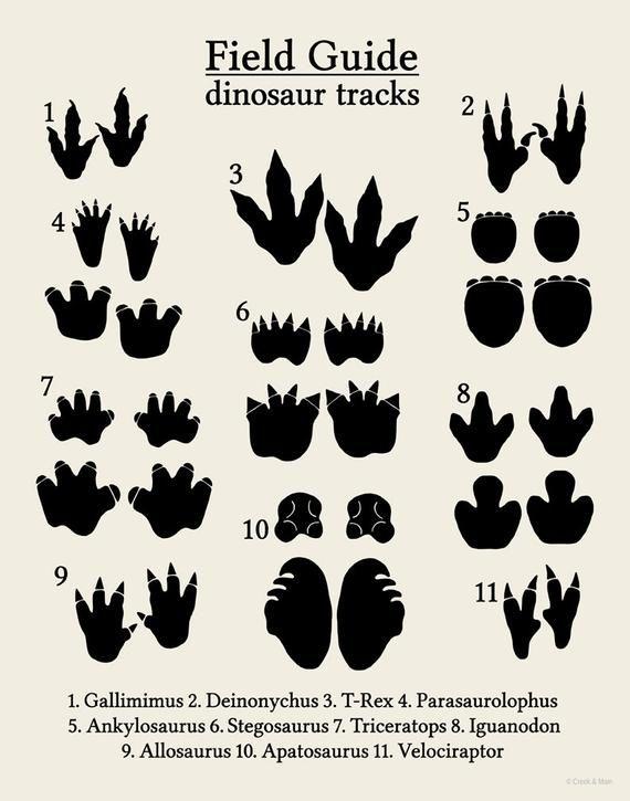 malvorlage dinosaurier fu゚abdruck  tiffanylovesbooks
