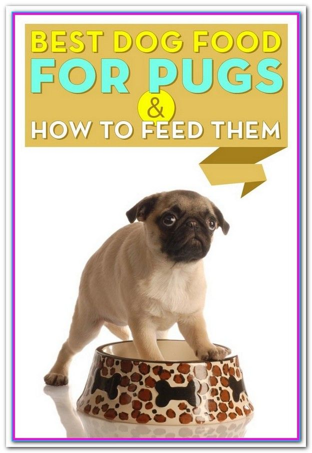 Best Dog Food For Dogs With Allergies 2015 Purina Pro Plan Focus