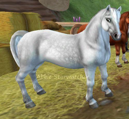 Hästar [Starstable Database] | Sso horses I own | Horses ...