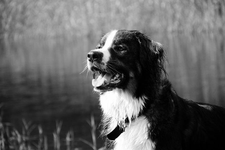 playing @ park #koningbinc #dog #dogmodel #dogs #animal #lovemydog