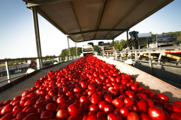 We believe in the focus on quality, from selection of seeds and farmers, to harvest and production, the attention to each single step in the whole chain and the passion for tomato  www.muttiparma.com.au