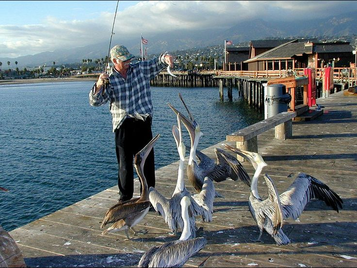 1000 Images About Fishing On Pinterest San Diego